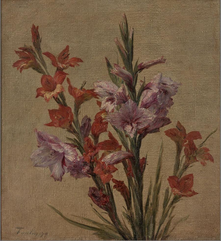 Glaïeuls (Gladiolen )