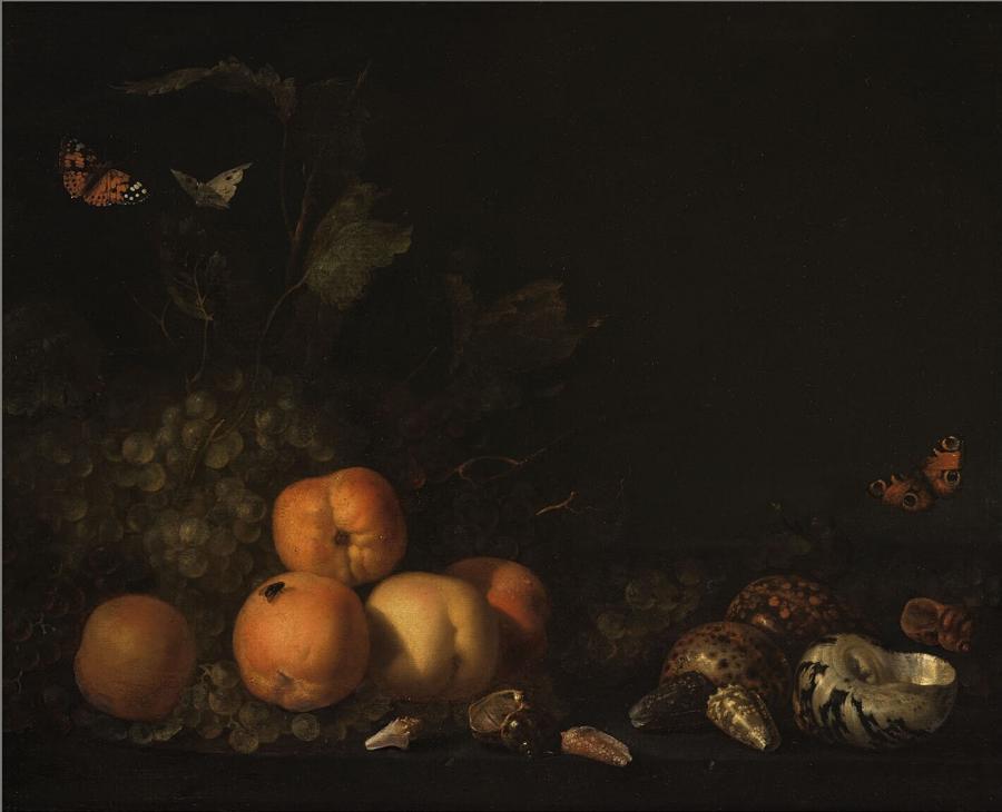 Stilleven met vruchten en schelpen