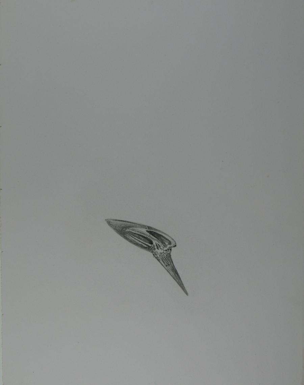 Illustratie bij 'De zangen van Maldoror'