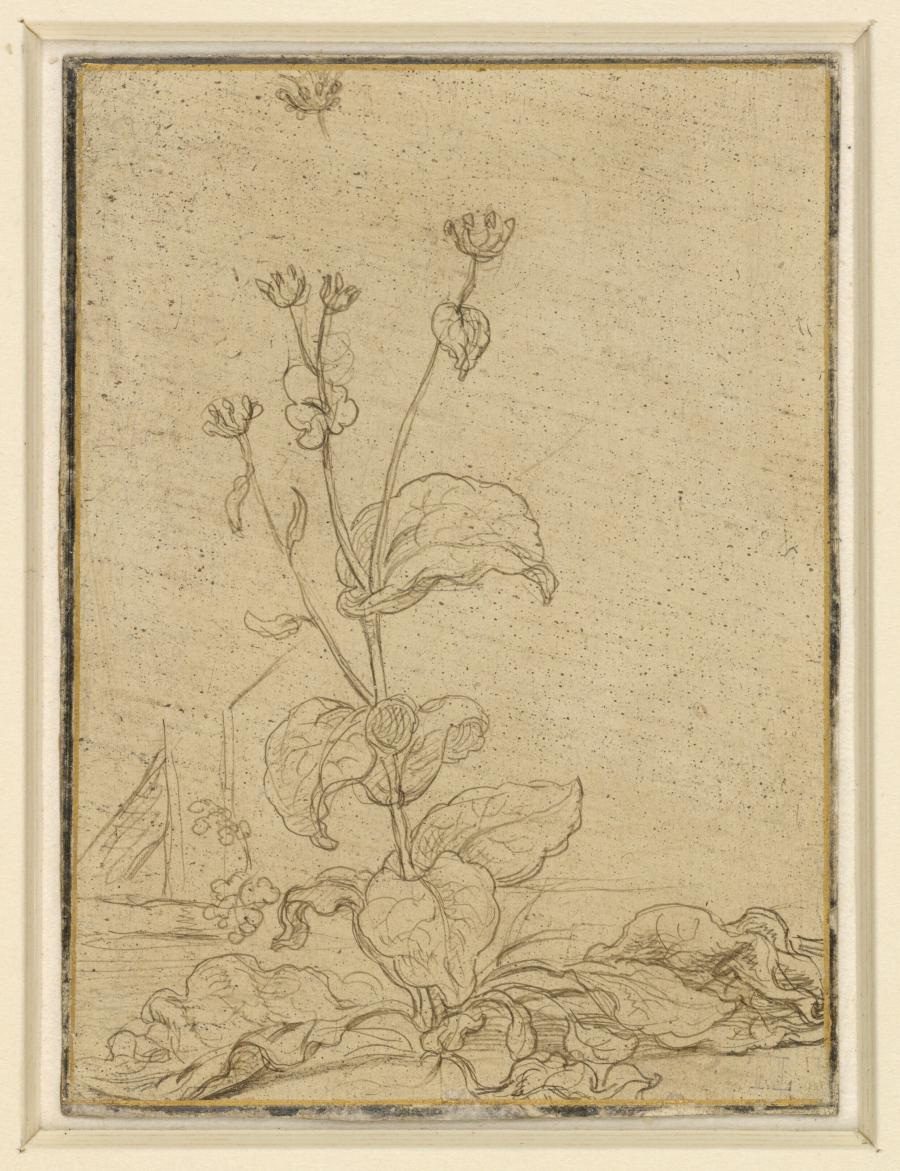 Study of a Tobacco Plant