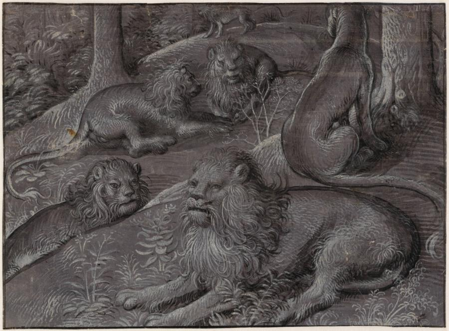 Six Lions in a Wood